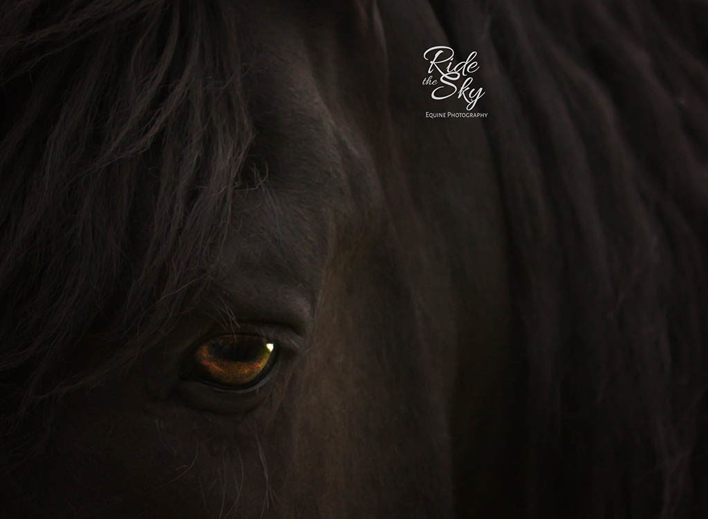 Photograph of Eye of Friesian Horse
