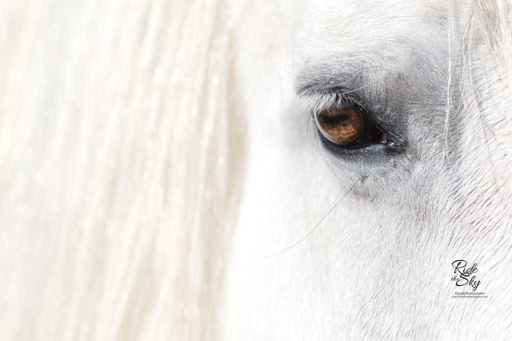 Highland-Pony-Horse-PHotography-Chattanooga-Tennessee-Ridetheskyequine