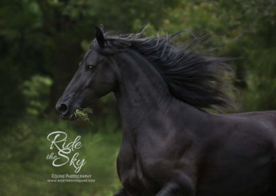 Horse-Photography-Field-Georgia-Dalton-Ringgold-Rome-Ridetheskyequine