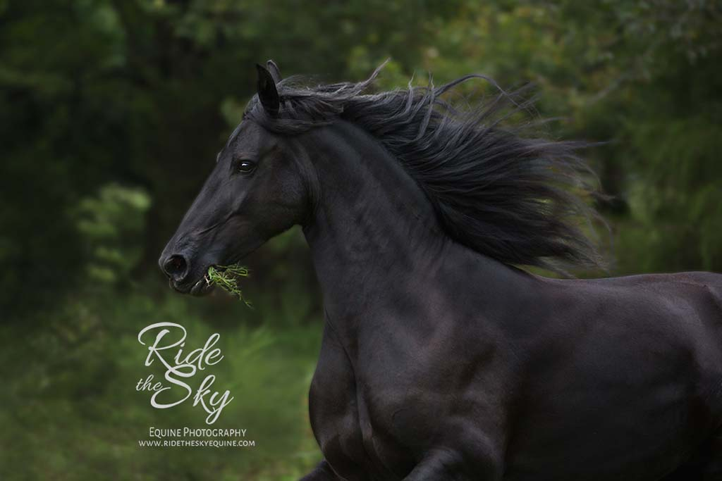 Horse-Photography-Field-Georgia-Dalton-Ringgold-Rome-Ridetheskyequine