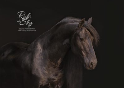 black-background-photography-horse-friesian-chattanooga-tennessee-ridetheskyequine
