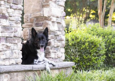 Portrait picture of Dog posed on stone wall in Chattanooga Tennessee from the image portfolio of Ride the Sky Equine Photography