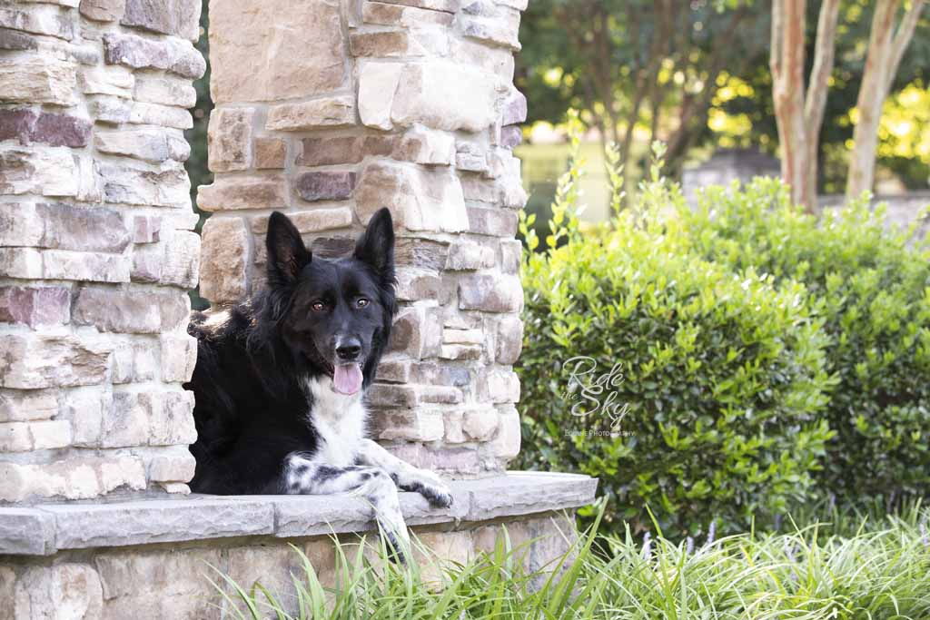 Dog-canine-photography-chattanooga-tennessee-ridetheskyequine