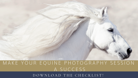 Tips for Making Your Equine Photography Session A Success