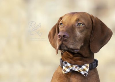 Pet-Photography-Chattanooga-Knoxville-Tennessee-RidetheSkyEquine