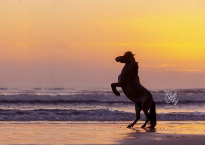 mini-horse-beach-picture-florida-RidetheSkyEquine-Photography