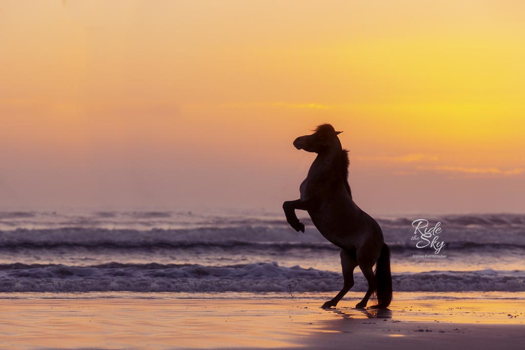 mini-horse-beach-picture-florida-RidetheSkyEquine-Photography