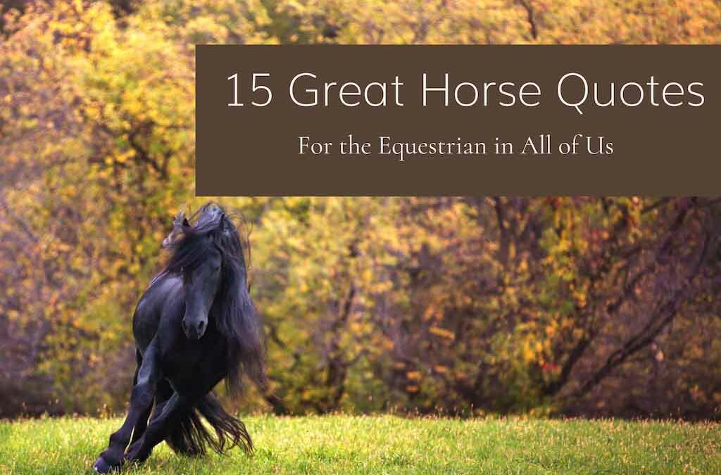 15 Great Horse Quotes