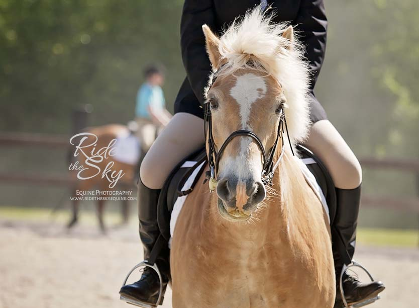 Haflinger and Rider at Spring Horse Show