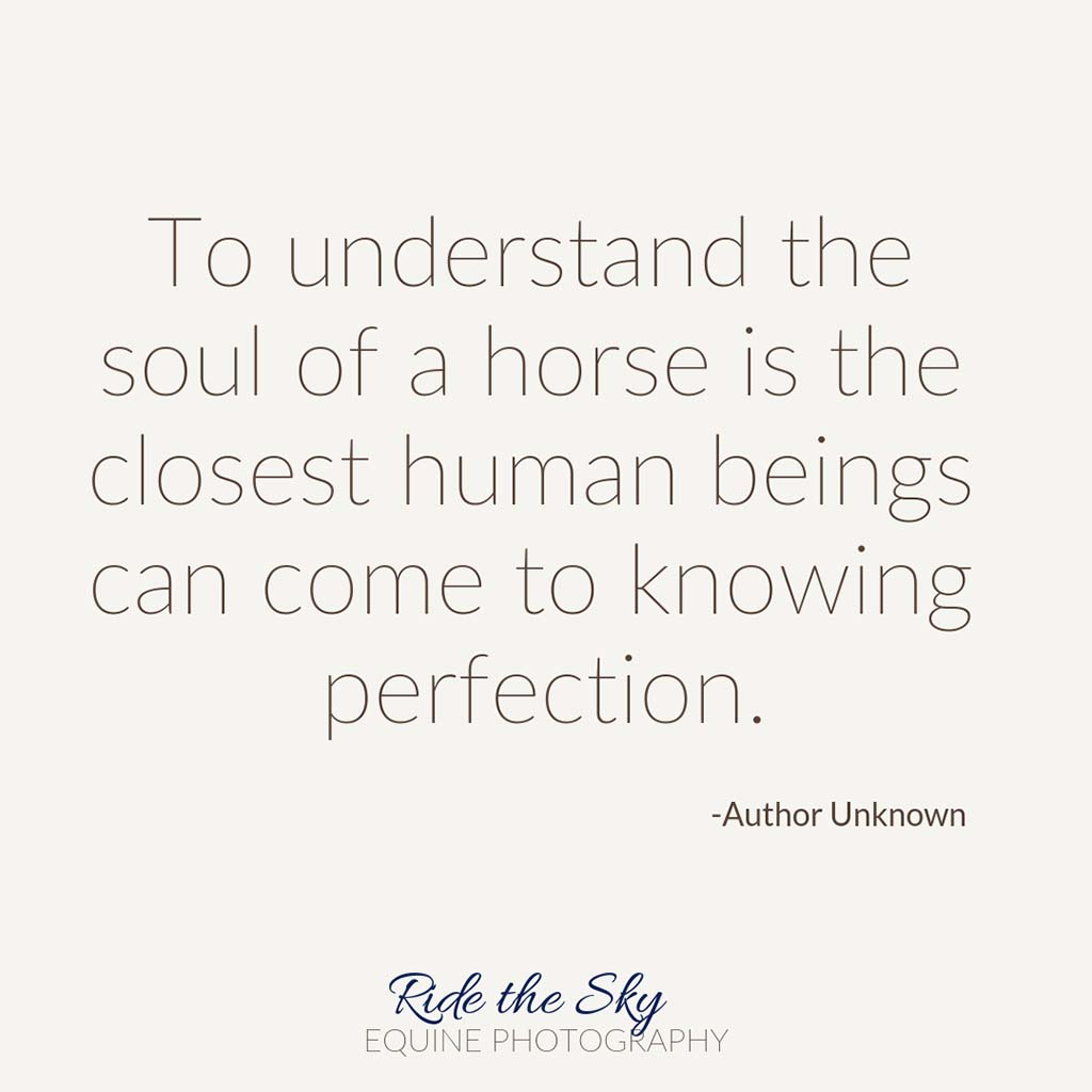 To understand the soul of a horse is the closest human beings can come to knowing perfection quote