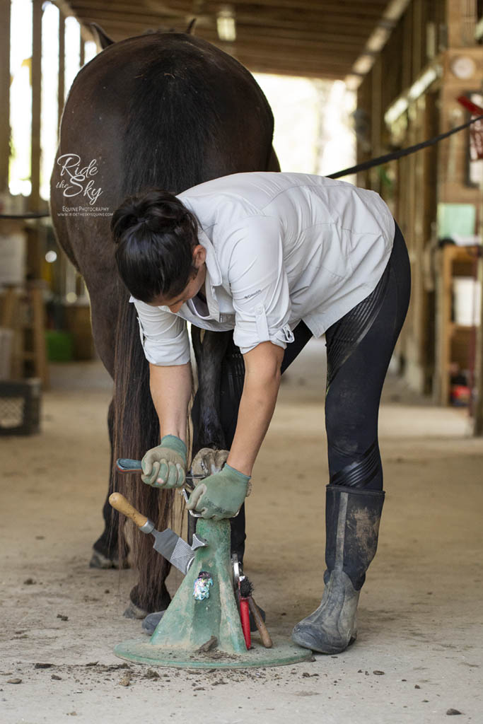 Barefoot Trimmer working on horse hoof