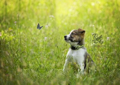 Puppy with Butterfly Pet Portrait in Chattanooga TN