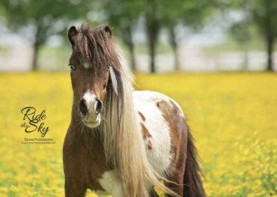 Byron-Storm-Paint-Horse-Mini-RidetheSkyEquine-WM