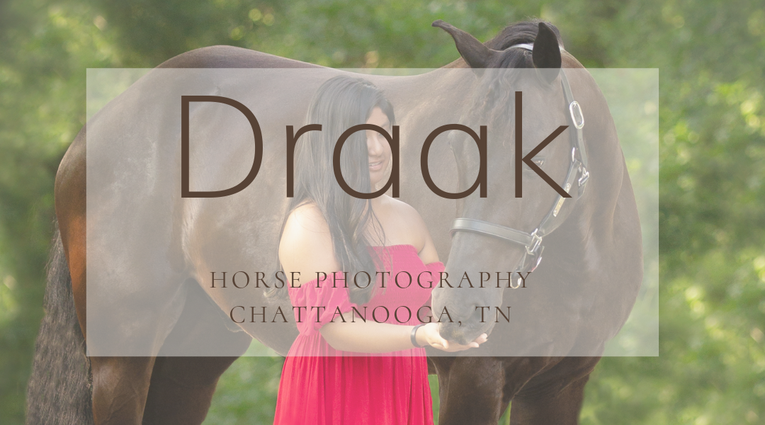 Draak, a Friesian Paint Horse Cross, Photographed in Chattanooga, TN