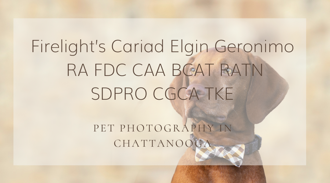 Pet Photography in Chattanooga: Strider the Vizsla