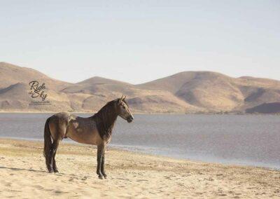 Warlander Colt Horse on Beach