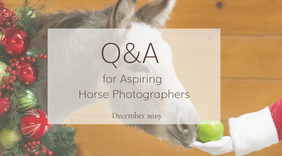 Equine Photography Business: December Q&A
