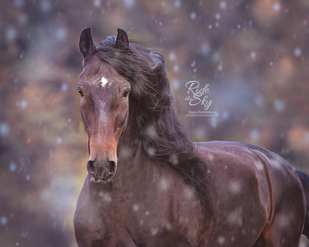 Lusitano Horse in the Winter