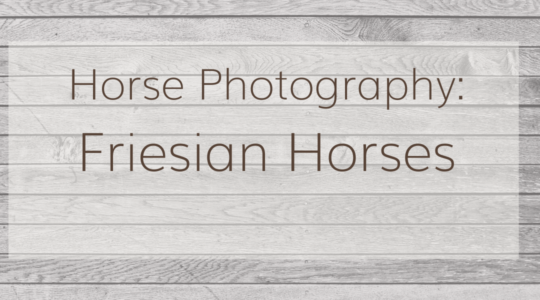 Horse Photography: Friesian Horses Feature Image