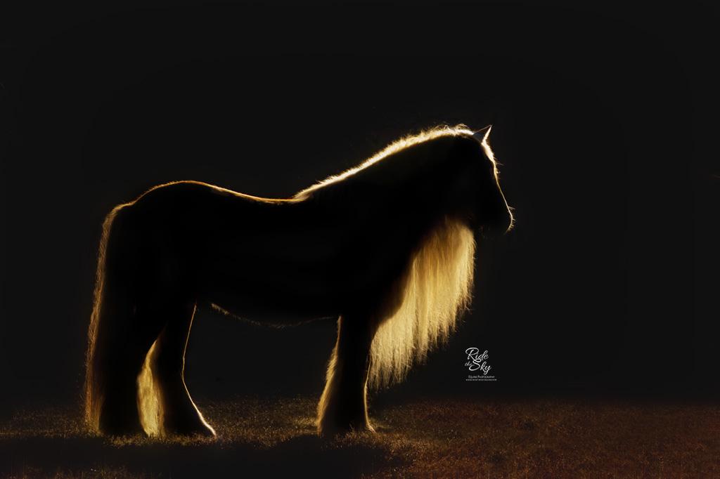 Gypsy Vanner Horse in Rim Light Silhouette