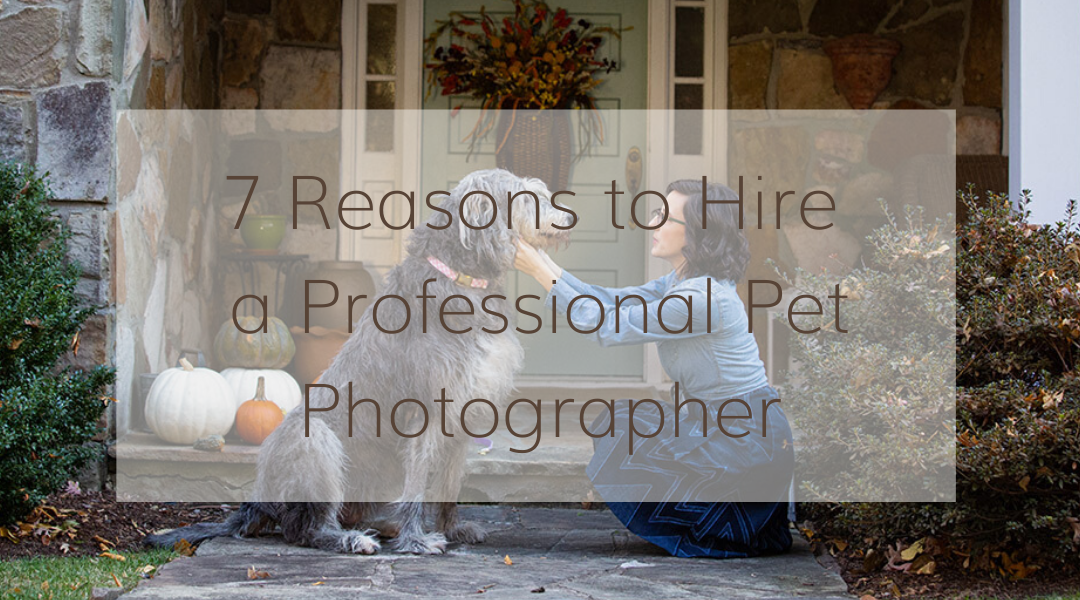 7 Reasons to Hire a Professional Pet Photographer Feature Image