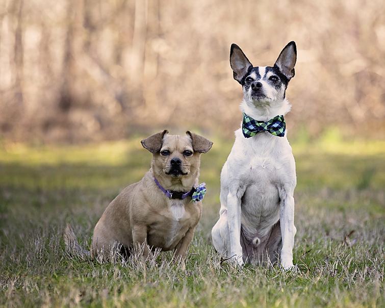 Two dogs sitting in field in February