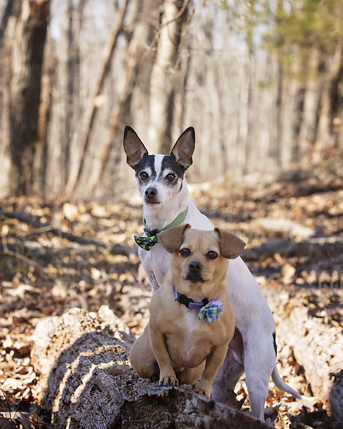 Two dogs photographed on log at Nature Park in February