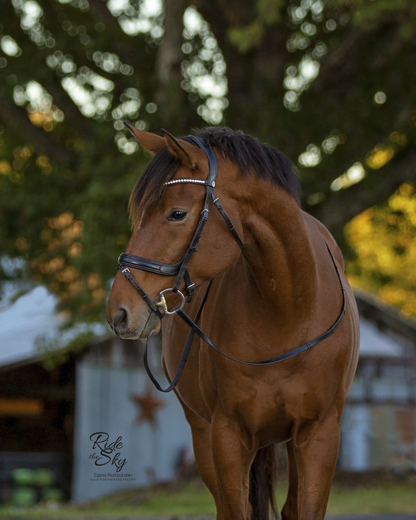 Off-the-Track Thoroughbred Horse Portrait in Chattanooga Tennessee
