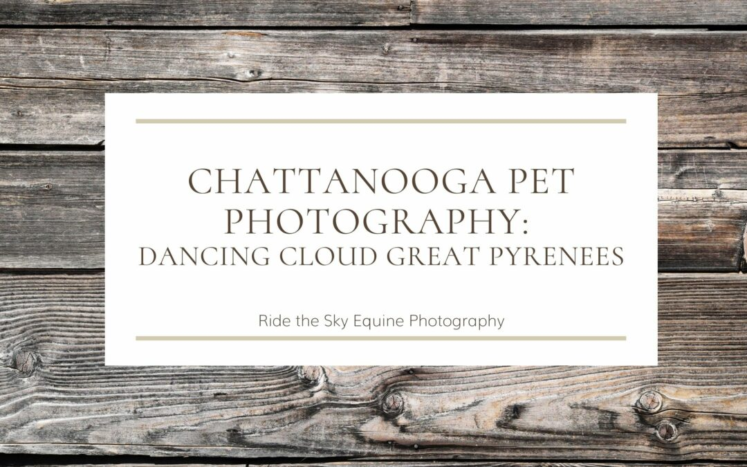 Chattanooga Pet Photography: Dancing Cloud Great Pyrenees