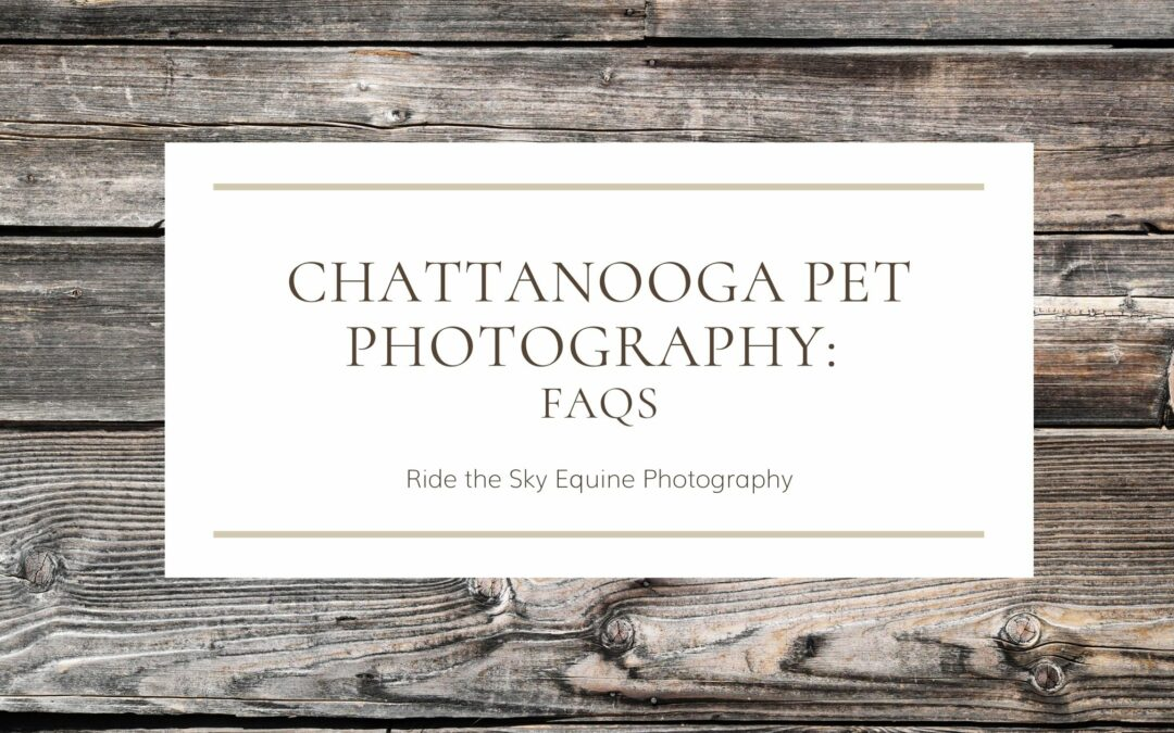 Chattanooga Pet Photography: FAQs