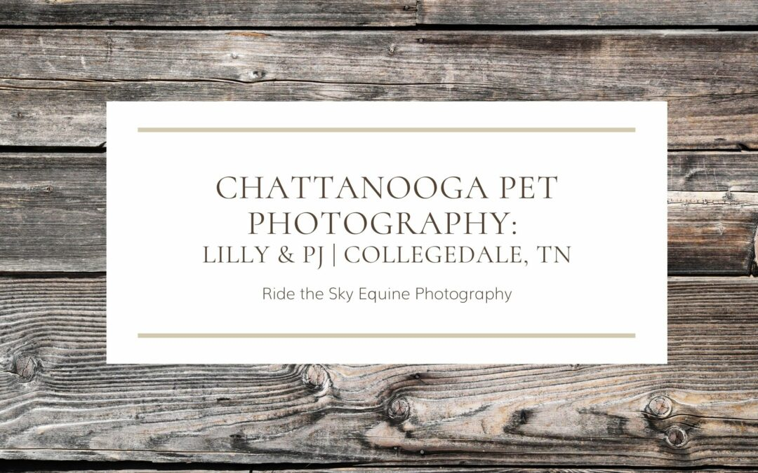 Chattanooga Pet Photography Lilly & PJ Collegedale TN