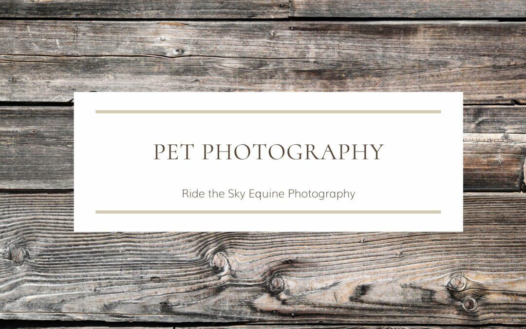 Pet Photography Options