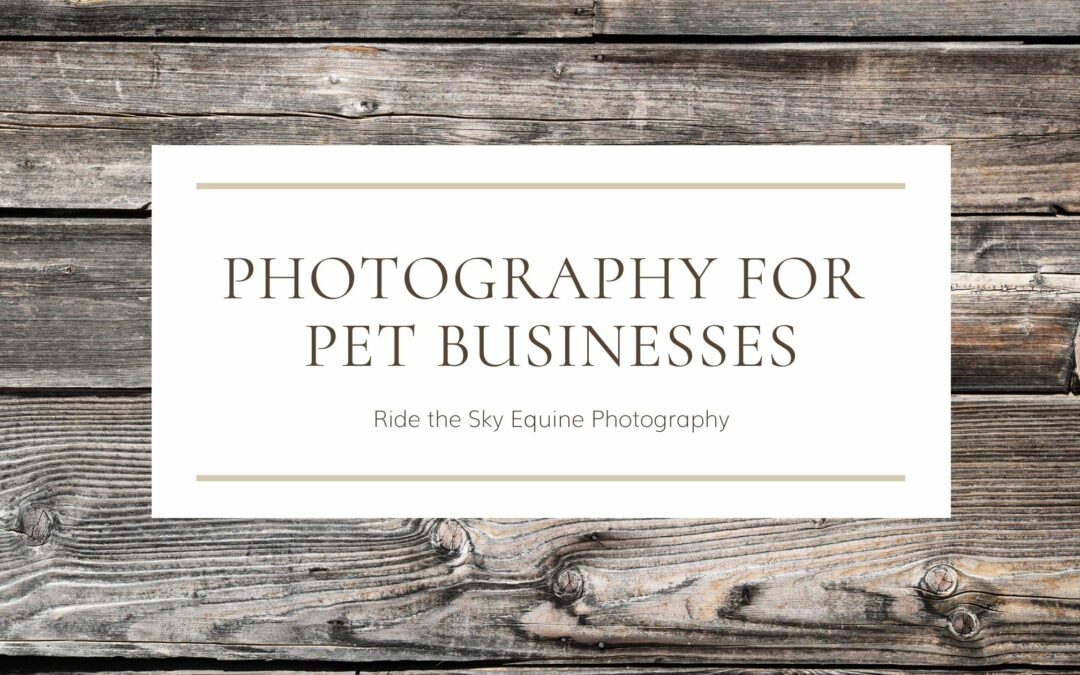 photography for Chattanooga pet businesses