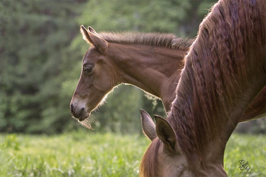 Advertising image for horse breeder