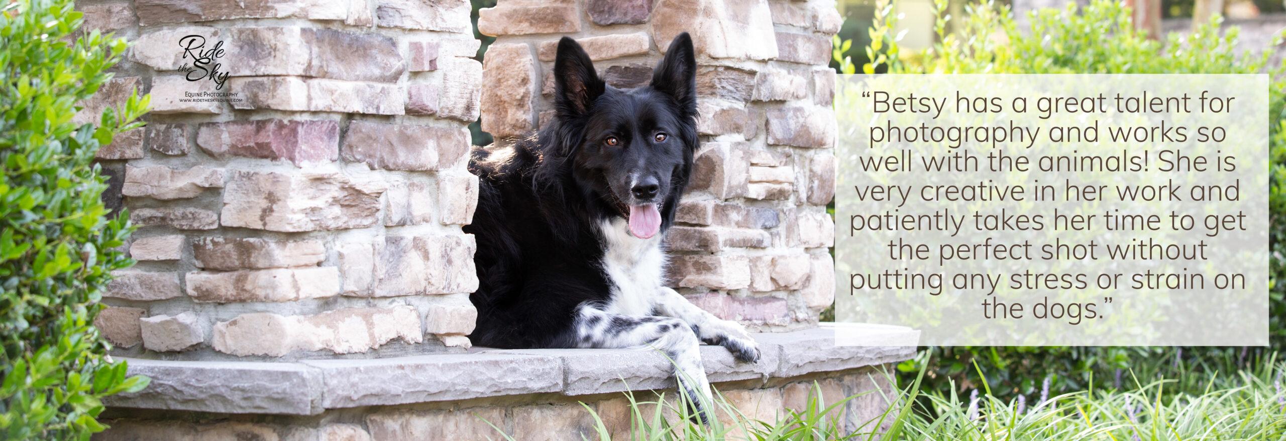 Dog on Stone platform Portrait