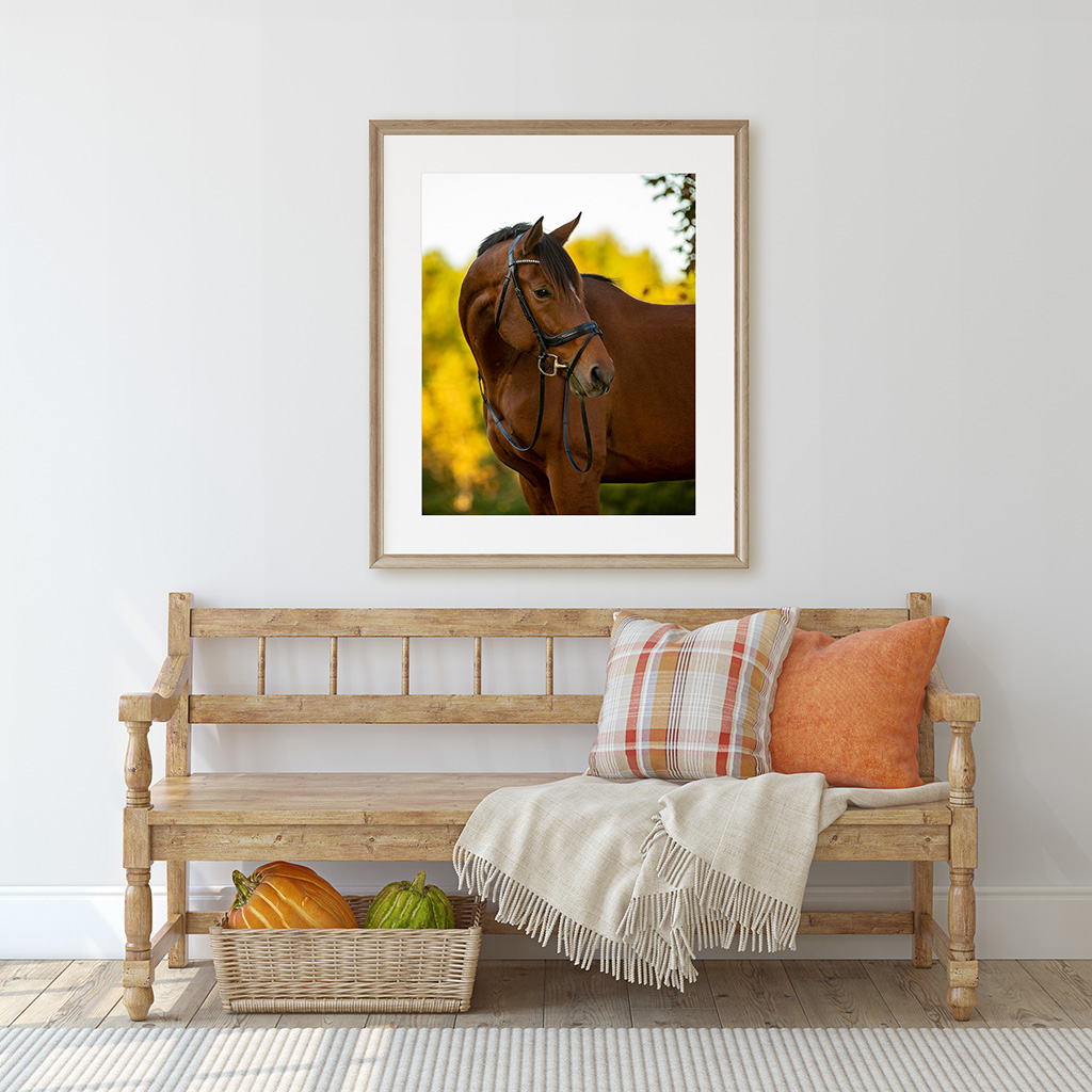 Horse Photography Portrait Wall Art