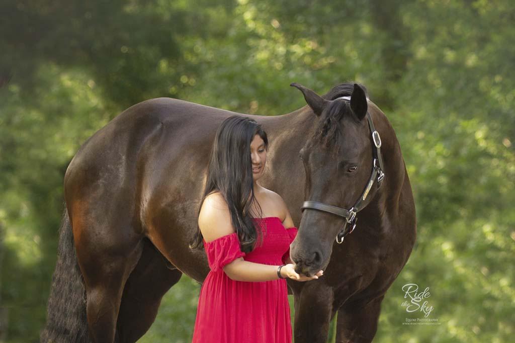 Portrait of Girl in red dress feeding Friesian Cross horse