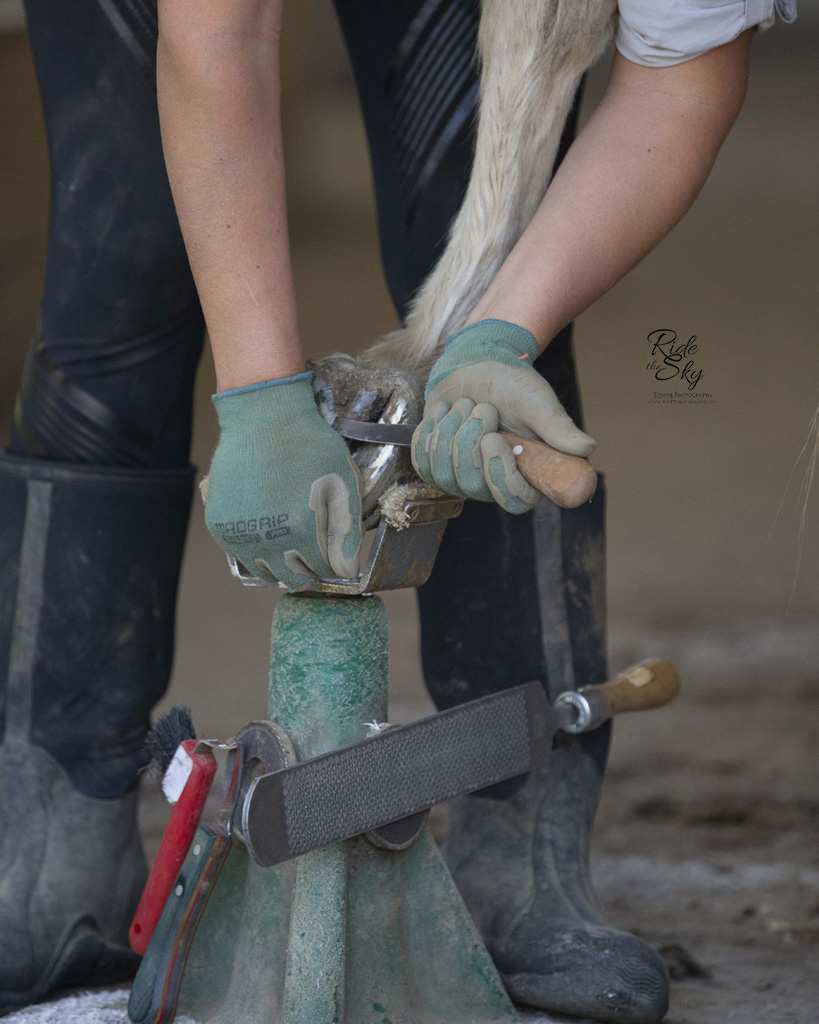 Commercial Equine Photography Advertising Picture for Horse Barefoot Trimmer