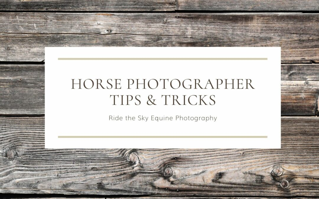 What do Professional Horse Photographers Use?