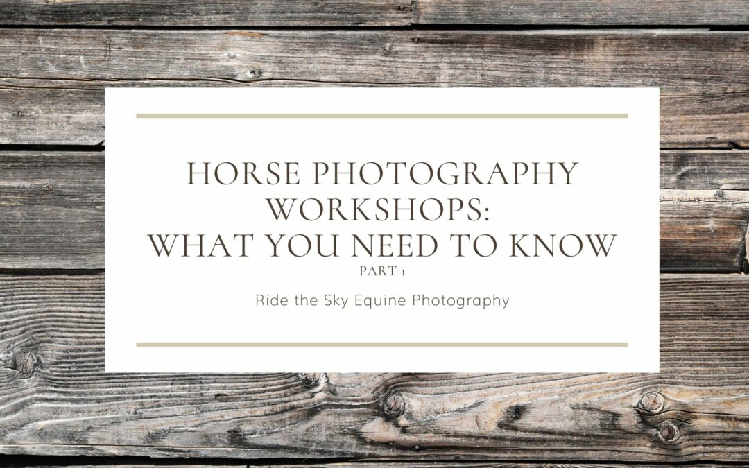 Horse Photography Workshops: What you need to Know Part 1