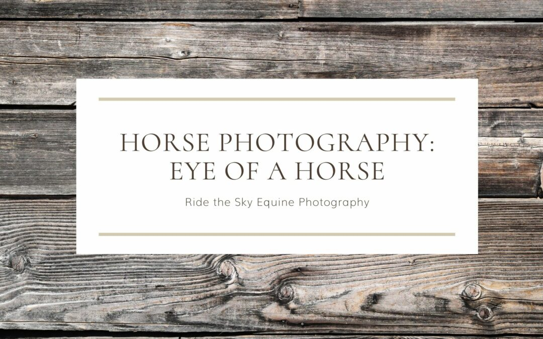 Horse Photography: Eye of a Horse