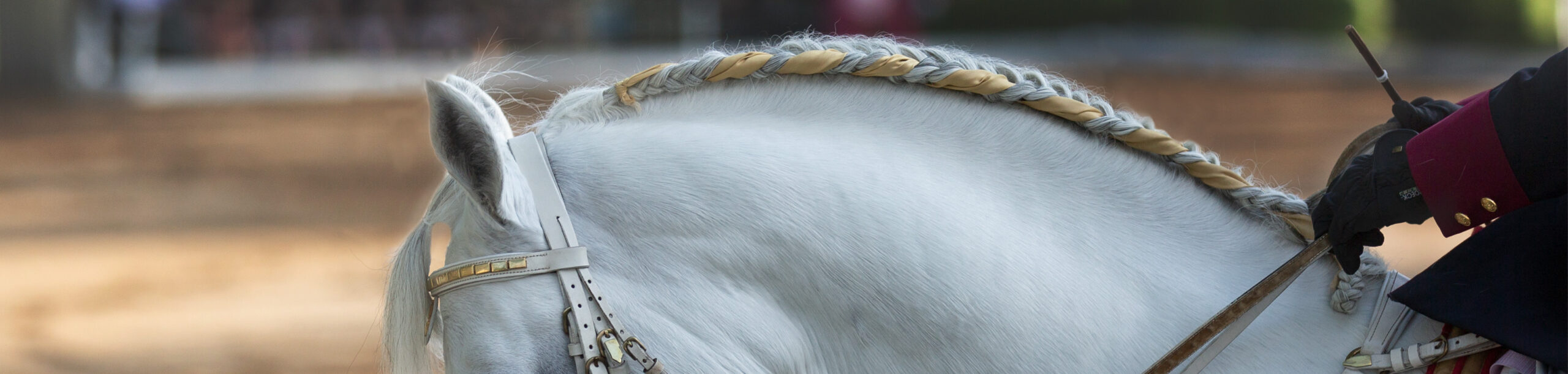 Commercial Equine Image example for a horse braider