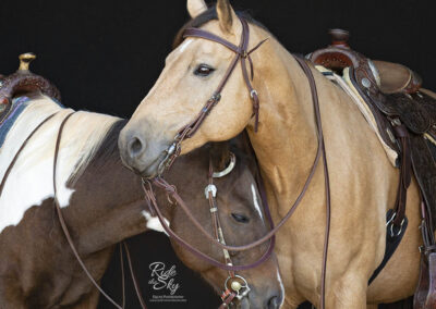 two western horses with tack standing together