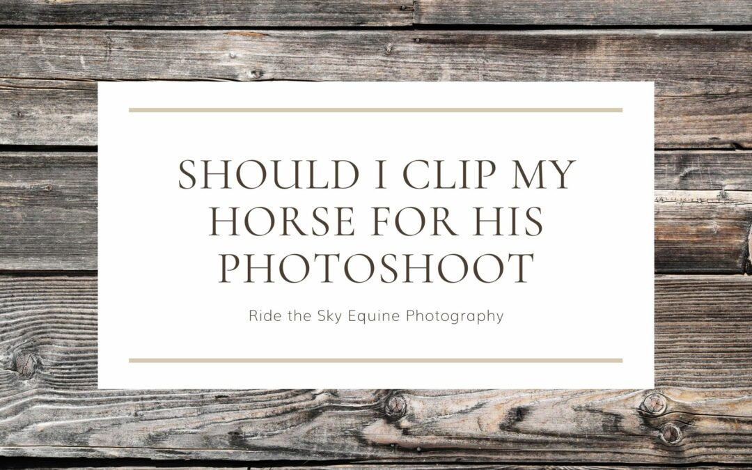 Should I Clip my Horse for his Photoshoot
