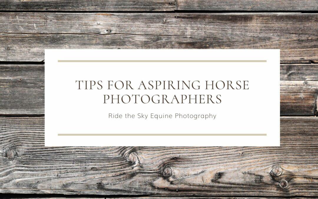 Tips for Aspiring Horse Photographers