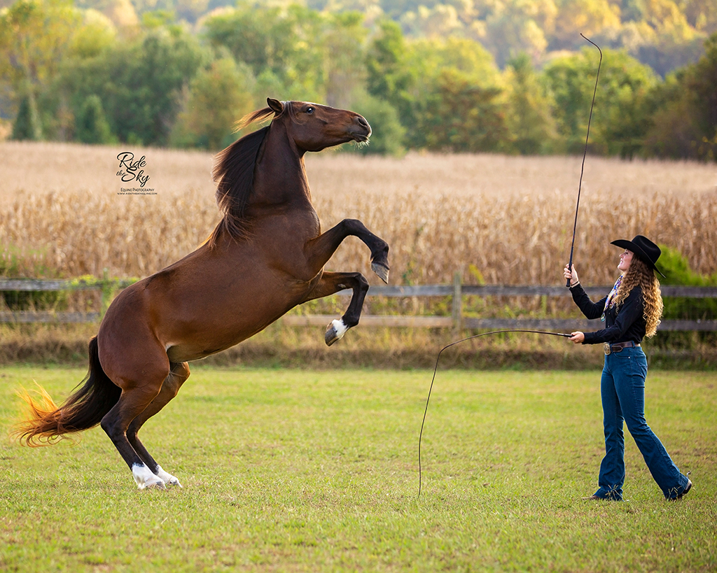 Mustang Horse Rearing on Command with Liberty Horse Trainer AR Horsemanship