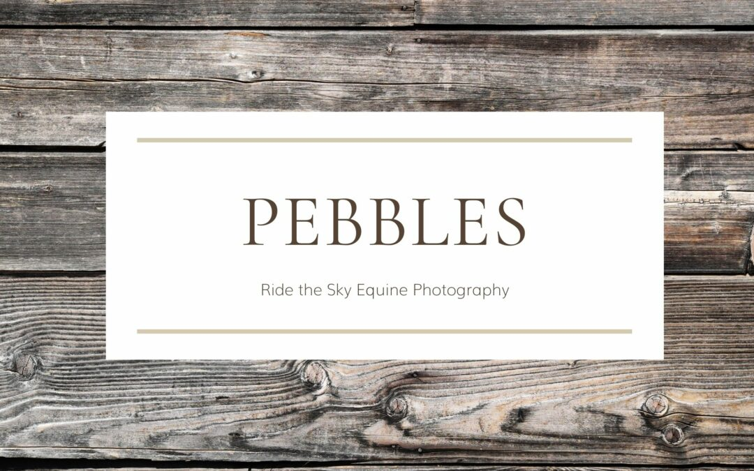 Chattanooga Pet Photography: Pebbles | Chester Frost Park